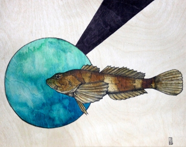 """Sculpin 
