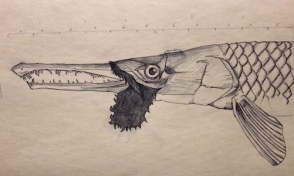 Gar sketch