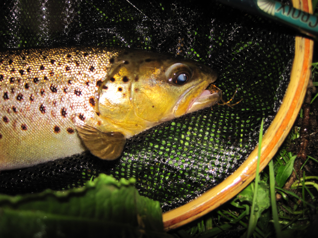 Wait..that's a trout.  Well, Nathan tied me some flies as a thank you and one of them caught this brown.