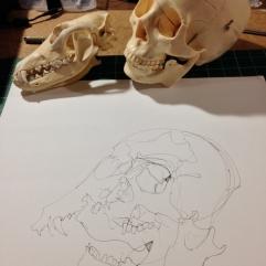 drawingx2