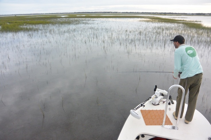 Stalking tailing redfish in Northern FL. Photo; Capt. Rich Santos